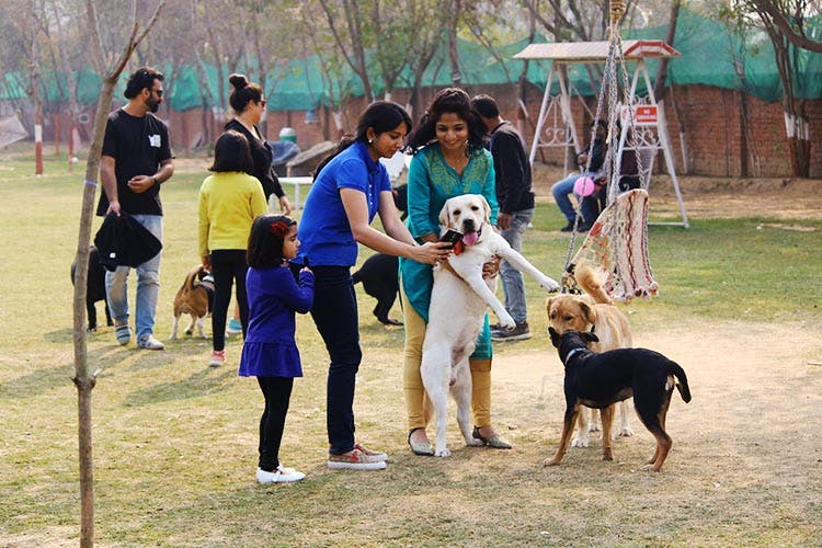A Pool Treats Toys Take Off The Leash Let Your Pet Run Free At This Cafe In Gurgaon Lbb
