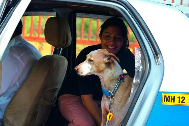 image - Pawdicures, Pet Taxis & More: Five Services Every Pet Parent In Pune Should Know About