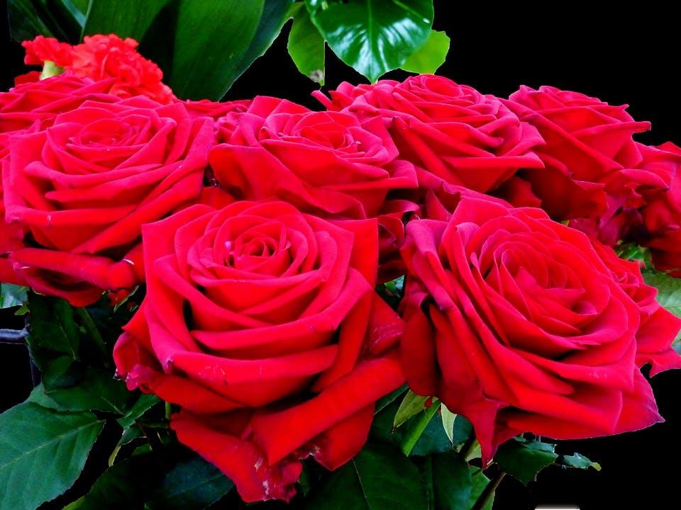 image - Hiba's Roses