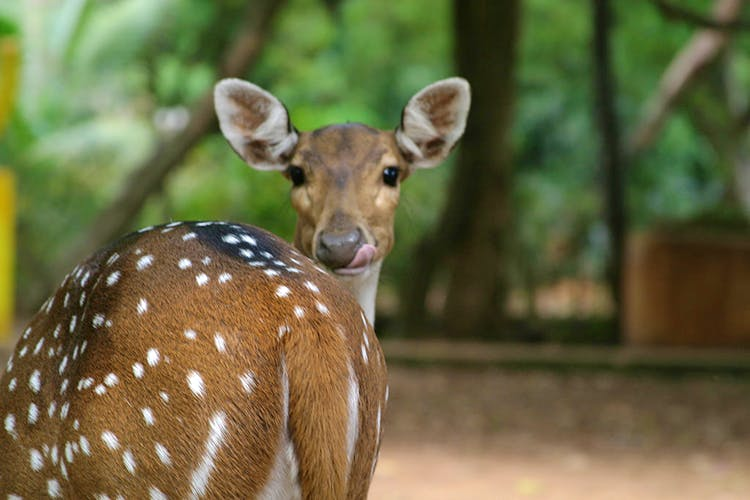 image - Guindy National Park