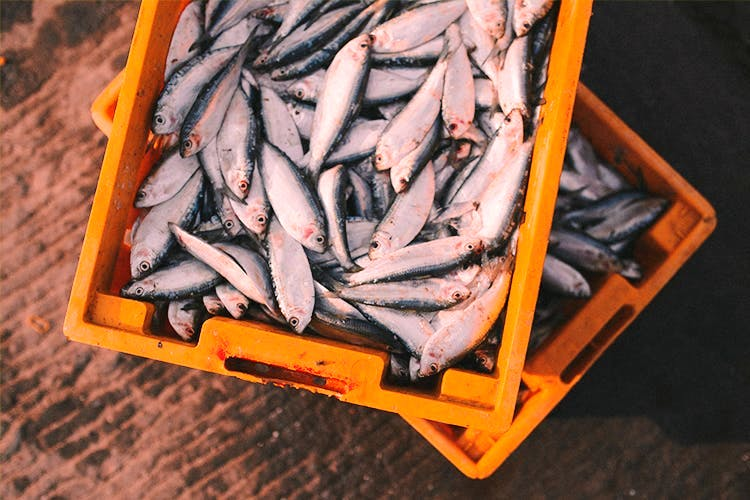 image - Hate Going To The Fish Market? 4 Home-Delivery Seafood Services You Can Trust