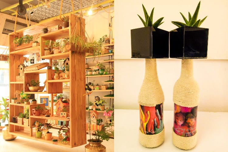 Paudhe Se Yaari: Gardening Store For Plants | LBB, Hyderabad