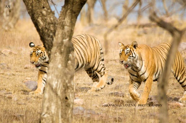 image - Into the Wild this Summer | Wildlife Parks to Visit