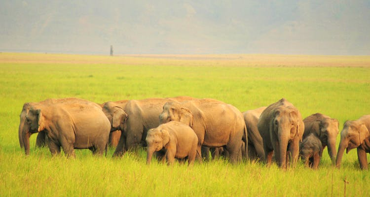 image - Trips for the Wildlife Lover to Take