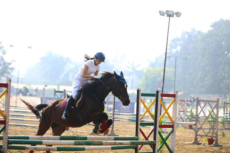 Horse,Bridle,Animal sports,Sports,Show jumping,Rein,Vertebrate,Equestrianism,Mammal,Equitation