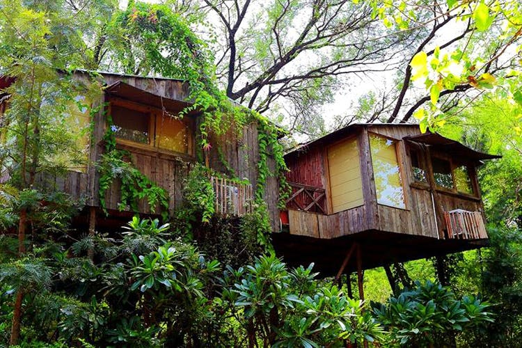Vegetation,Jungle,House,Tree house,Tree,Natural environment,Building,Rainforest,Botany,Forest