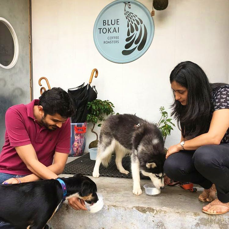 Image result for blue tokai dogs