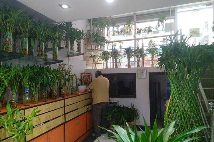 Property,Houseplant,Botany,Building,Room,Lobby,Plant,Real estate,House,Interior design