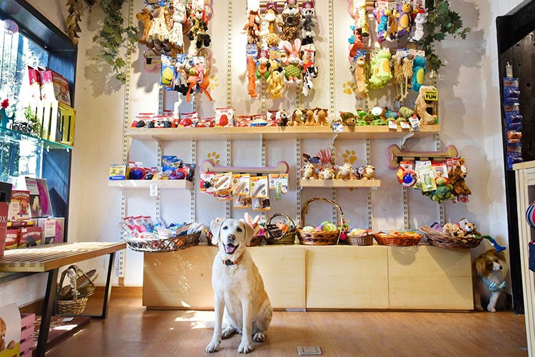 Building,Retail,Interior design,Collection,Companion dog,Fawn,Canidae,Toy