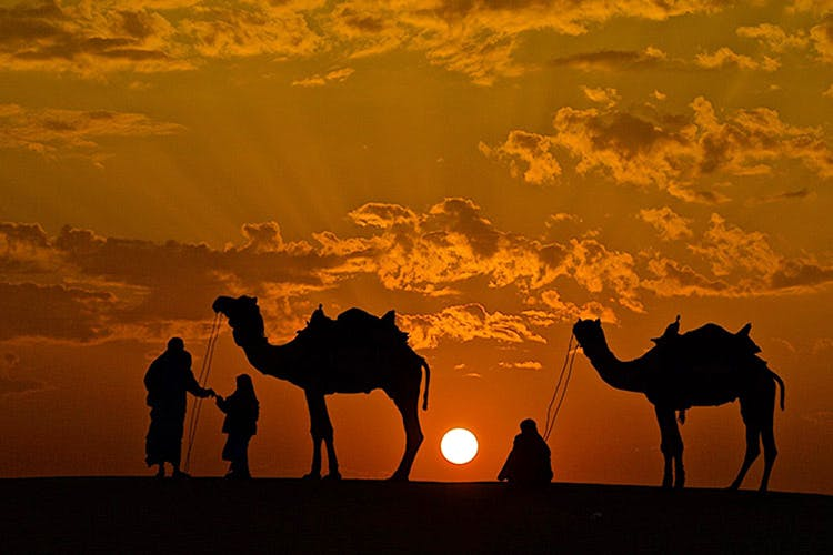 Camel,Arabian camel,Camelid,Sky,Natural environment,Wildlife,Desert,Landscape,Sunset,Ecoregion