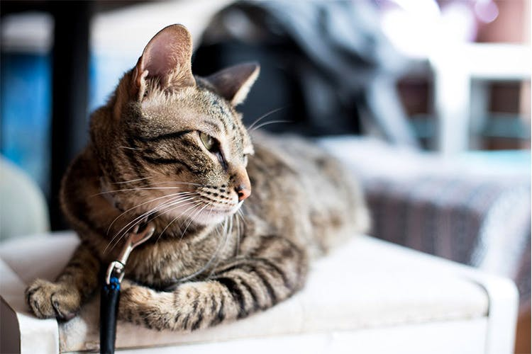 Keep Your Cat Comfortably Cool This Summer By Doing These 5 Things