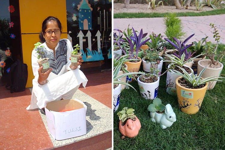 Flowerpot,Houseplant,Plant,Flower,Tree,Adaptation,Herb,Perennial plant