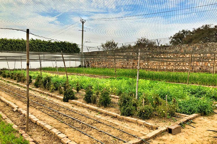 Soil,Field,Land lot,Agriculture,Grass family,Plant,Plantation,Rural area,Farm,Tree