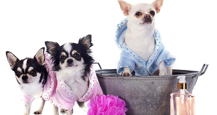 image - Dog Grooming Parlours in Town that Give Your Pooch the Royal Treatment