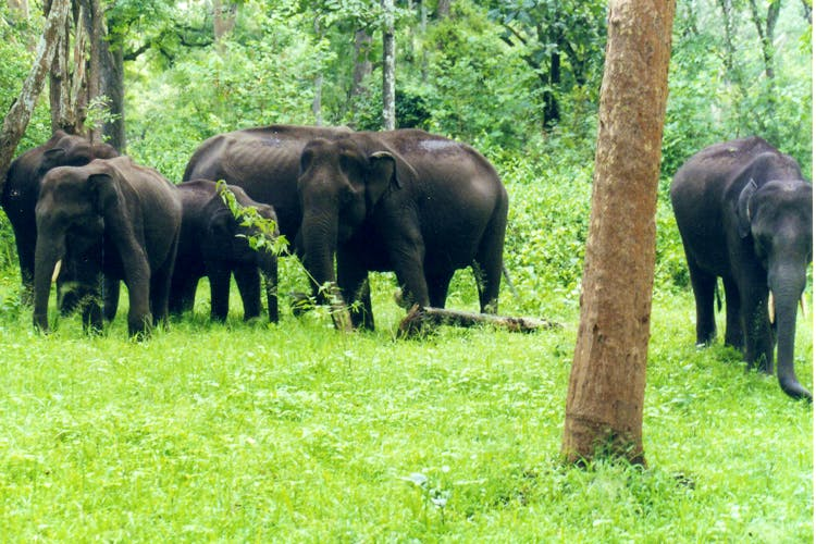 image - Here's Where You Can Spot Wildlife In Coorg