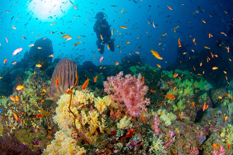 image - Scuba Diving To Reading: New Year's Resolutions We're Encouraging For 2020