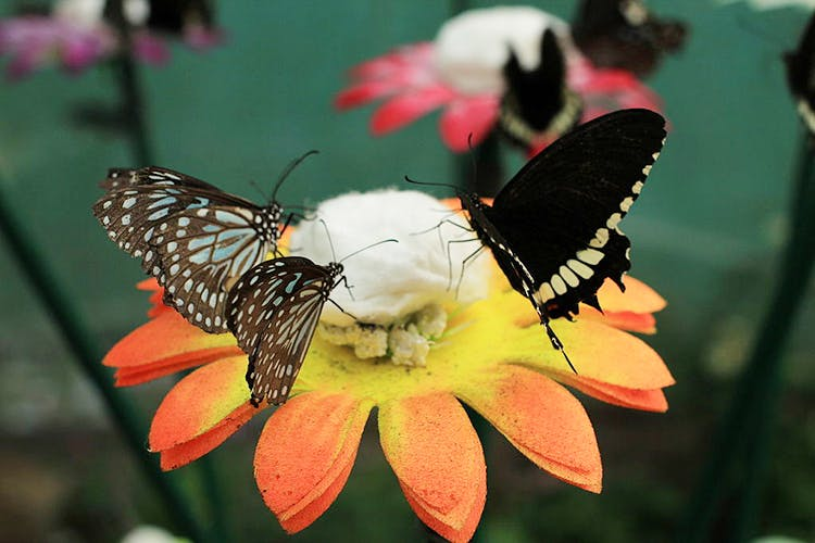image - Butterfly Park