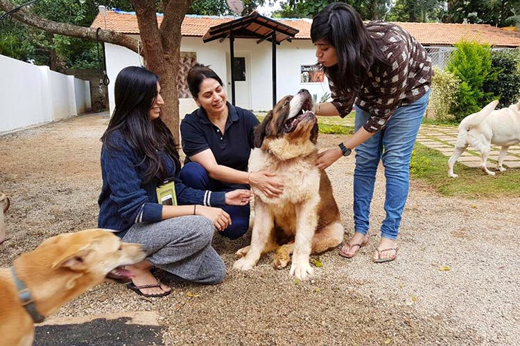 image - Pet Parents, These Pet Sitting Services Will Make Your Time Away From Your Pets Fret Free