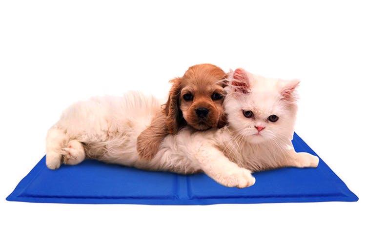 Mammal,Vertebrate,Cat,Puppy,Carnivore,Canidae,Dog,Kitten,Companion dog,Dog bed