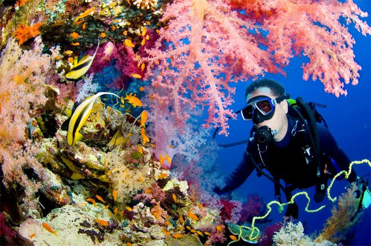Underwater,Coral reef,Reef,Marine biology,Natural environment,Underwater diving,Scuba diving,Organism,Divemaster,Coral