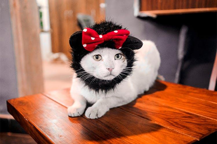 image - Cat Cafe Studio