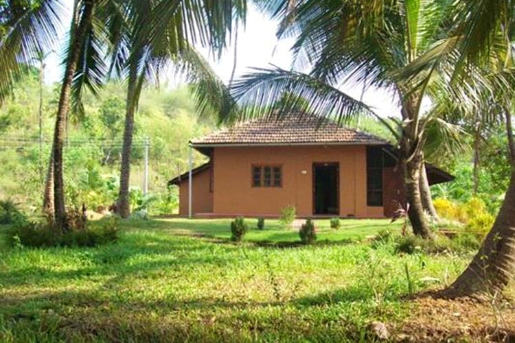 Property,Home,House,Building,Rural area,Cottage,Tree,Real estate,Land lot,Palm tree