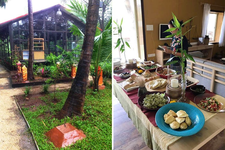 Brunch,Tree,Meal,Backyard,Grass,Plant,Buffet,Houseplant,House,Table