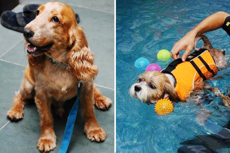 PetZone In Mumbai Has A Pet Pool For Dogs | LBB, Mumbai
