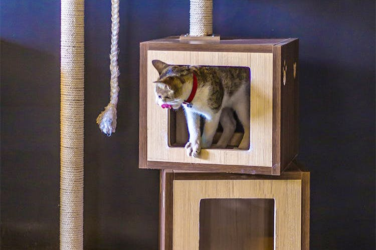 Cat,Felidae,Small to medium-sized cats,Picture frame,Carnivore,Abyssinian,Whiskers,British shorthair,Window,Cat furniture