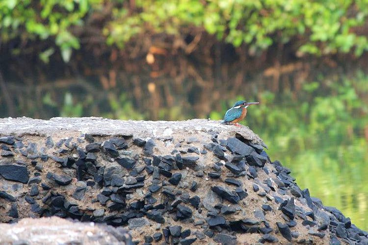 image - Dr. Salim Ali Bird Sanctuary