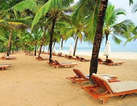 Palm tree,Beach,Vacation,Tree,Arecales,Tropics,Resort,Outdoor furniture,Caribbean,Sunlounger