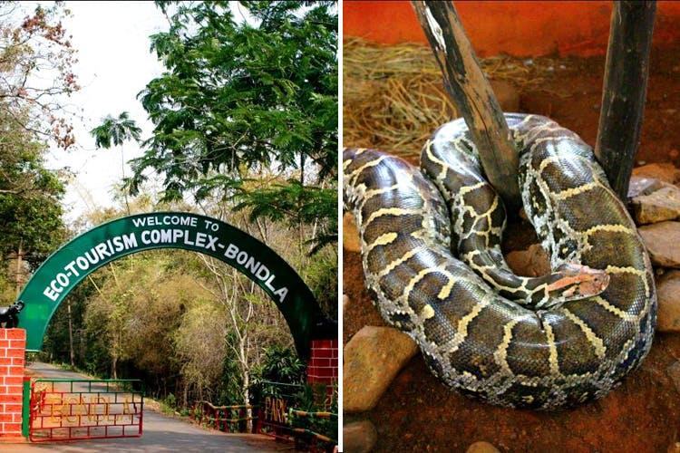 Python family,Snake,Python,Reptile,Burmese python,Boa,Serpent,Rock python,Scaled reptile,Boa constrictor