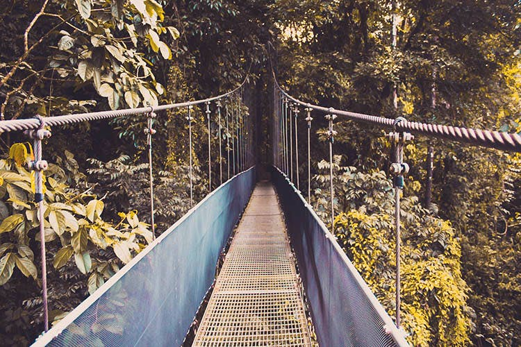 Bridge,Canopy walkway,Suspension bridge,Tree,Leaf,Rope bridge,Yellow,Sky,Inca rope bridge,Line