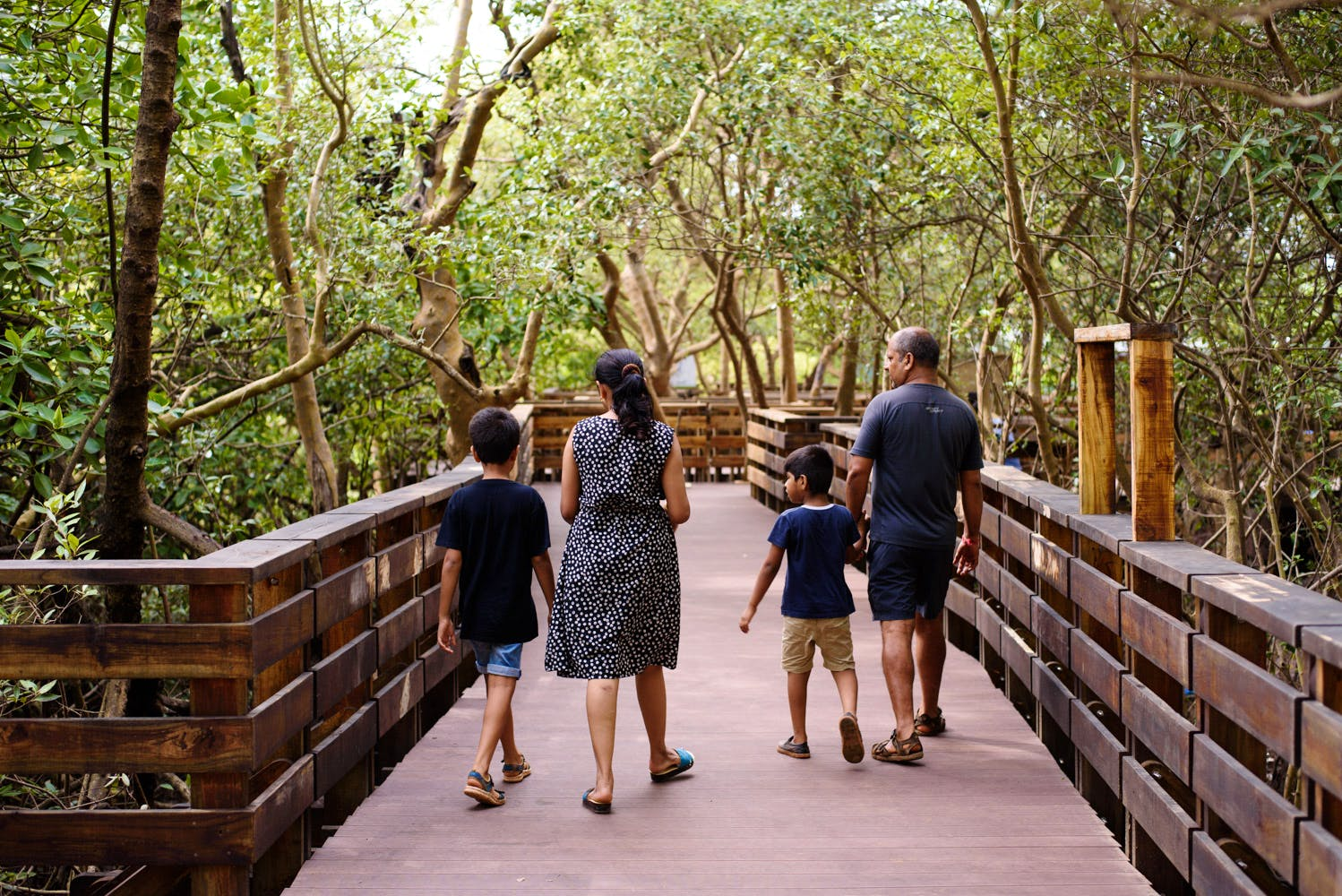 image - Mangrove Boardwalk